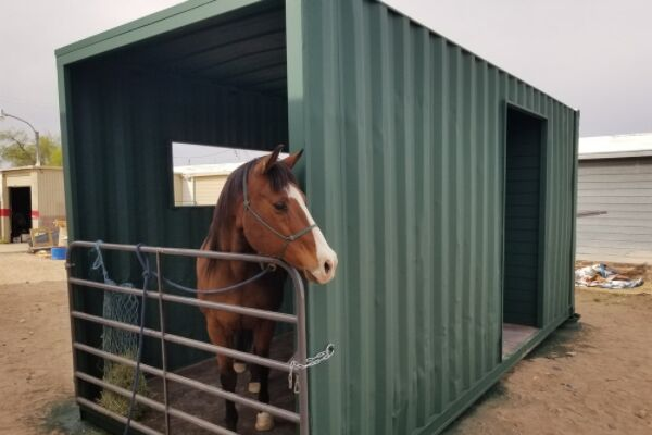 Ways to use a shipping container: Horse shelter