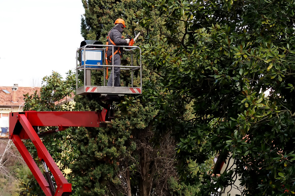 Photo of man standing in cherry picker pruning large trees